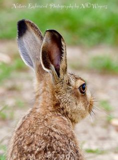 Nature Embraced Photography hare