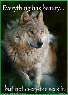 Wolves are beautiful!