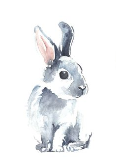 Having moved to rural Australia recently I have become enamoured with the local wildlife. I will go out each day and photograph whoever happens to be visiting, whether bird, marsupial or insect. I have recently started painting little watercolours from my photographs, combining two of my loves, art and wildlife. / This is a painting of the Moon Rabbit, because of course the local rabbits, although sweet, are not desirable to have around because they eat everything, dig lots of holes and ...