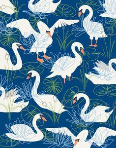 Swans illustration