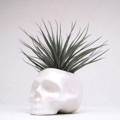 Ceramic Skull Planter perfect for cactus succulent or by mudpuppy