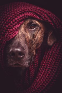 They call him the quiet rambler (by Elke Vogelsang) [dog in knit]