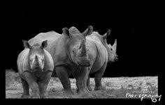 Its Rhino Friday  by SteveBailey