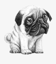 Since Join the Pugs bring the cuteness to Pug lovers all over the world. If you love Pugs. Pug Photos, Pug Pictures, Cute Pug Puppies, Cute Dogs, Photo Animaliere, Pugs And Kisses, Baby Pugs, Pug Art, Pug Love