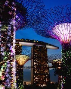 Gardens by the Bay (Supertree Grove), Singapore
