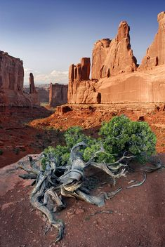 Park Ave Arches National Park Photograph by Dave Mills
