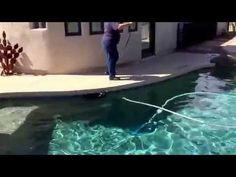 "Cave creek dog training ""k9katelynn"" teaches""bayner"" miniature schnauzer swim!…"