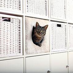 Kuschelhöhle fürs Regal | Raumteiler | Tolle Idee | platzsparend | z.B. IKEA EXPEDIT