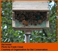 Johnson Bat House Beneficial Creature Habitats Pinterest