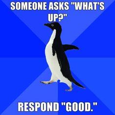 Ahhaha, I love socially awkward penguin!