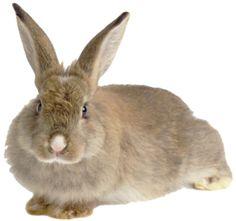 Rabbit - adopt a pet