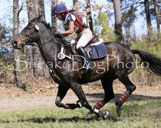 Full Gallop