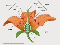 Learn about plants with flower dissection google images flower diagram quiz on flower parts ccuart Image collections
