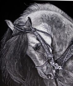 horse scratchboard art