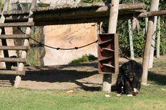 monkey, jardim zoologico 4.jpg