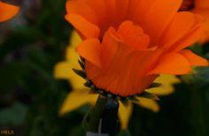 Retalhinhos de Mim: Foi você chegar que desabrochou as flores do meu c...