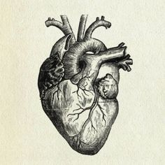 heart drawing | tumblr | art | pinterest, Muscles