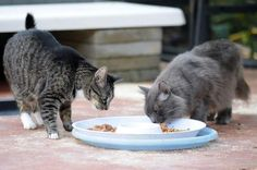 """""""The Space Coast Feline Network has spayed or neutered more than 10,000 cats since its inception. Imagine how many kittens that prevented from being born. How can anyone not believe it's better to keep these poor, unfortunate animals from adding to the population as opposed to trapping them and killing them?"""""""