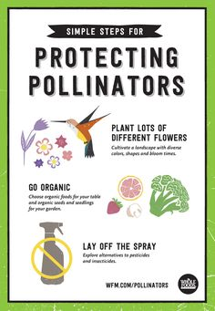 Planting pollinator friendly plants helps the bees. In turn, the bees help continue the growth of our important food sources: plants! Learn more about what food plants are pollinator friendly (and get yummy recipes for pollinator friendly smoothies!) @WholeFoodsMarket (client)