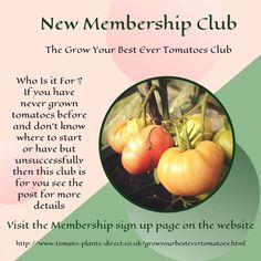 So who is this club for? Anyone can join the club if they wish But its aimed primarily at those who struggle to grow tomatoes successfully or who are new to growing tomatoes and want extra help and advice along the way. Tomato Growers, Grow Tomatoes, Tomato Plants, Planting Vegetables, Along The Way, Garden Ideas, Join, Advice, Gardening