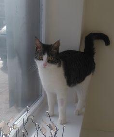 Lara Cat | Pawshake