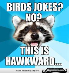Lame Pun Coon: Birds jokes? No?...