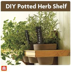 Display your favourite selection of fine herbs as tastefully as the meals they enhance with this DIY herb shelf. Outdoor Projects, Easy Diy Projects, Shelves For Sale, Herb Pots, Home Hardware, Diy Planters, Indoor Plants, Basement, Shelf