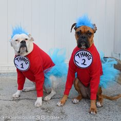 Thing 1 and Thing 2 Dog Halloween Costumes from Farmhouse38.com