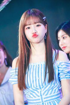 Kpop Girl Groups, Kpop Girls, Snsd Yuri, Honda, Sakura Miyawaki, Yu Jin, Japanese Girl Group, Kim Min, Most Popular Memes