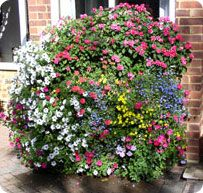 Castle Coombe Planted Bloom Master Flowers