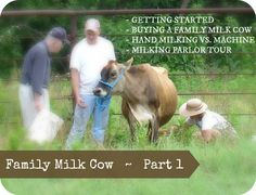 Family Milk Cow {Part One}