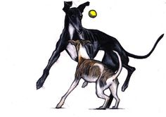 Original Whippet and greyhound drawing colour by JimGriffithsArt