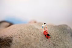Life in Miniature