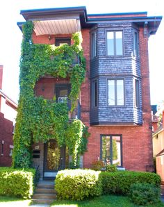 Ivy on House