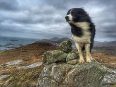 Sometimes in Scotland it can be a little windy! grin emoticon Taken on the Isle of Harris, Outer Hebrides, by The Shepherdess.