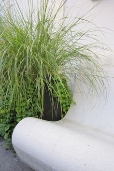 Large plant #LoveNature