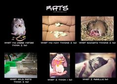 Pretty interesting statement about these little sweet critters-and true