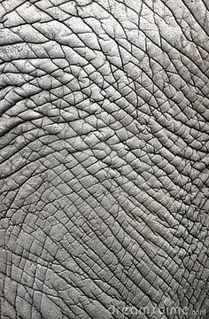 elephant-skin-11683031.jpg (295×450)