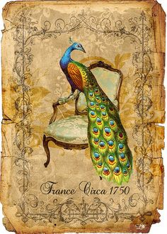 peacock on old paper.