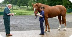 VETTING A HORSE The term given to the procedure carried out by a vet to ensure a horse is sound and well, also called a Pre-purchase Examination
