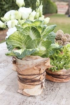 """lettuce or artichoke centerpieces. charming. simple. inexpensive (start growing indoors late winter)  wrap with a bow and add a tag that says """"take me home"""".  nice gift and simple decoration.  plus  it matches the color scheme and overall aesthetic of the event."""