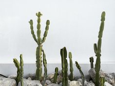 #cactus #casacook #travel #love #like #follow