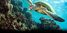 Non à la destruction de la grande barrière de Corail au profit de l'industrie. #SOSreef     Appelez les dirigeants à défendre notre  Patrimoine Mondial ! http://sosreef.wwf.fr/