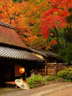 fall in kyoto, japan