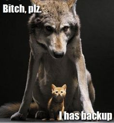 memes Hilarious animal pictures Cats are cute and sometimes unintentionally do stupid funny things, so we have collected some the funniest and most hilarious cat memes and pictures hope you will enjoy em. Funny Animal Quotes, Cute Funny Animals, Funny Cute, Funny Dogs, Cute Cats, Animal Humor, Easy Animals, Funny Kitties, Mom Funny