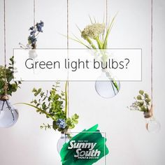 Eco-Ideas are everywhere, and sometimes are so unique that add a creative touch to decoration. For instance, light bulbs, which, once their shelf life as light sources is over, can become beautiful pots for mini-plants. 📍Sunny South is your paint and decoration specialty store. Come visit us at 3202 and 3031 Coral Way; 2428, SW 8th St; 11865, SW 26th St; 16181 NW 57th Ave; 108 Weston Rd, Sunrise; 1101 S Federal Hwy, Pompano Beach.#SunnySouth #Miami #decoration #ecoideas #lightbulbs #plants…