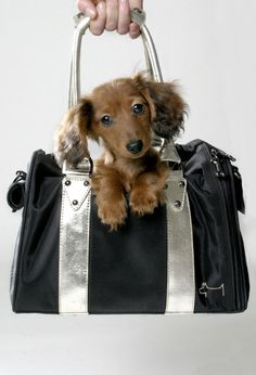 Dubai Bag de Dogs Department