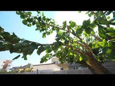 Ako sa postarať o zanedbaný strom (NOVÁ ZÁHRADA) - YouTube Nova, Garden, Youtube, Flowers, Plants, Garten, Flora, Plant, Lawn And Garden