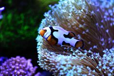 Eric Yao's (squareff7) Reef Aquarium