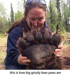 The Paw of a Sedated Grizzly. It...is....Huge! Via @Sally Parker.
